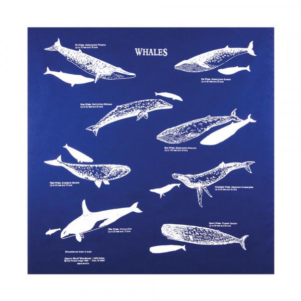 Whales Bandana