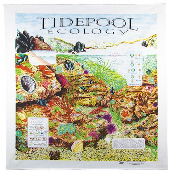 Tide Pools Bandana
